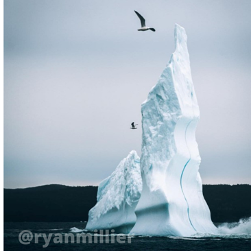 ryan miller_blog (2)